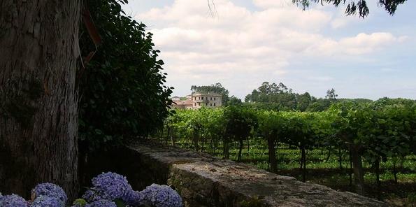 Detalle de una de las 12 hectáreas de viñedo de Pazo de Barrantes