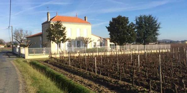 Château al fondo con viñedo en primer plano