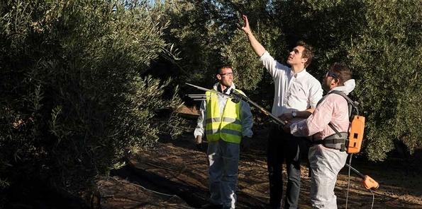 Pedro Yera en los olivares