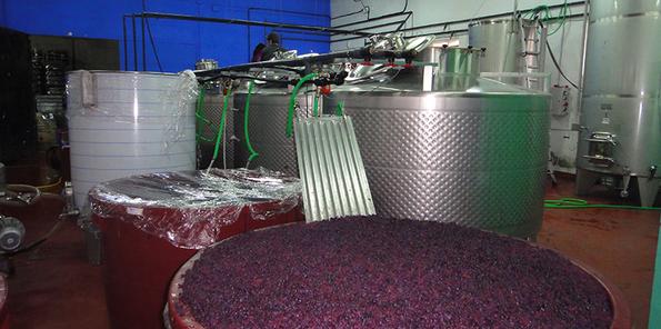 Uva fermentando