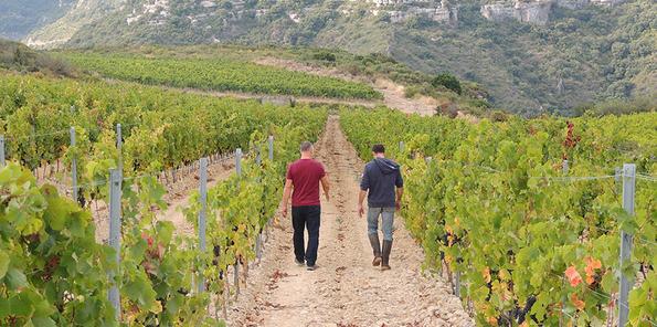 Jeff y un compañero paseando por los viñedos