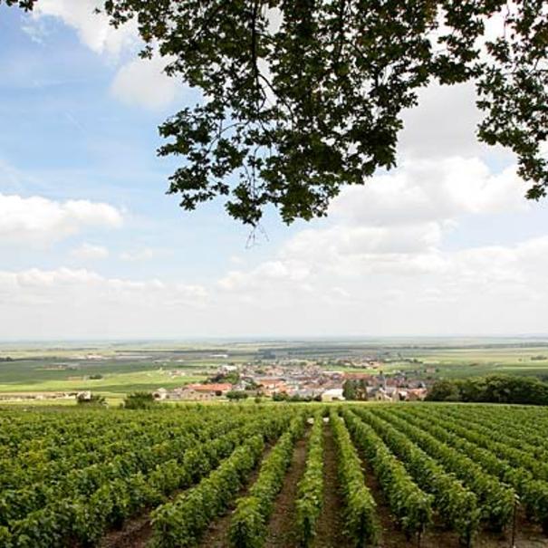 Acheter les vins salon delamotte prix d part propri t for Champagne lamotte prix