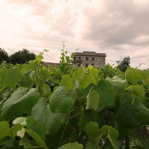 Imagen de los viñedos con el Pazo de Barrantes al fondo