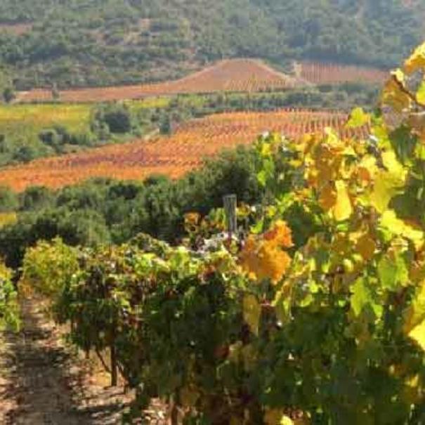 Detalle de las viñas
