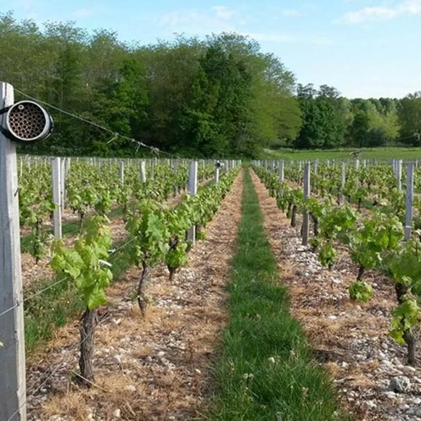 Detalle de gestión del viñedo