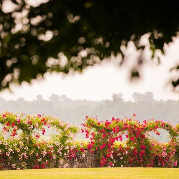 Flores del viñedo