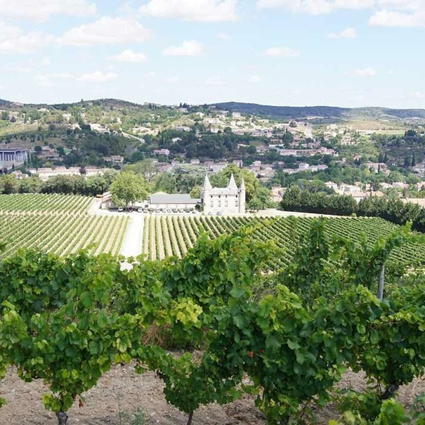 Vista general de un viñedo controlado por Sieur D' Arques
